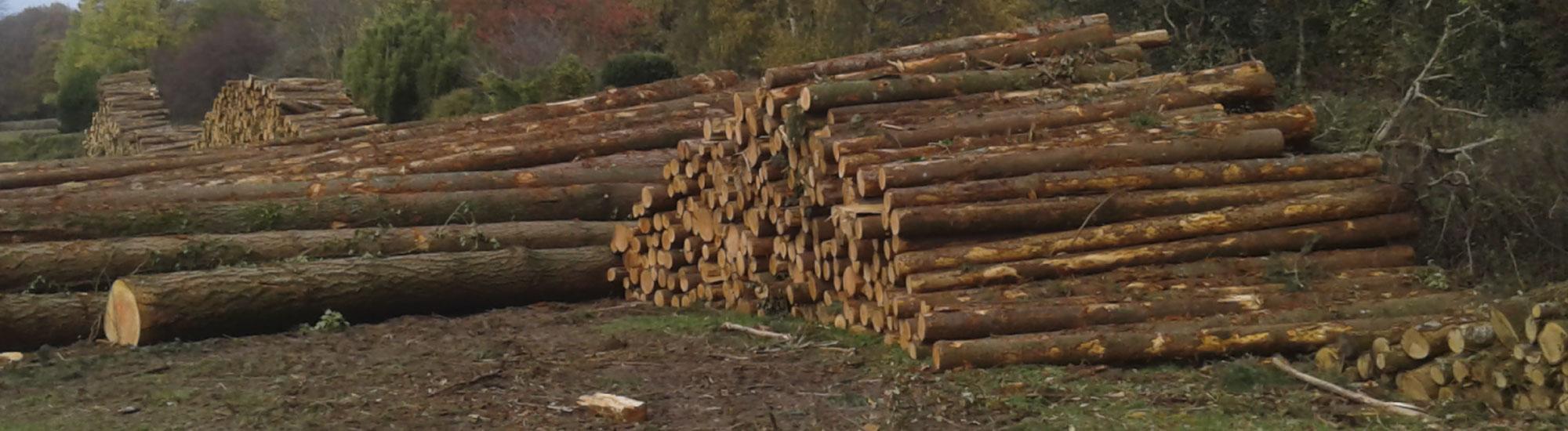 SARL TAURË gestion forestière